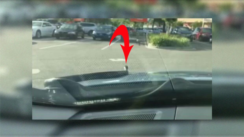 Hombre de Florida pasa tremendo susto cuando serpiente de 6 pies sale de...