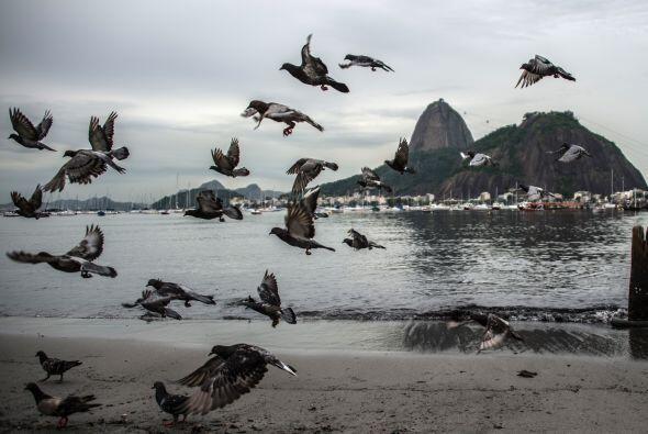 Las palomas muestran la bella vista frente a la playa Botafogo, en la Ba...
