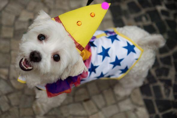 Aproximadamente 100 perros participaron con sus dueños en este evento y...