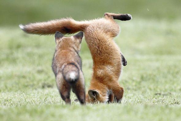 Los pequeños saltan y saltan como parte de su entrenamiento para...