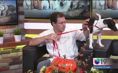 Evite que sus mascotas se extravíen durante la celebración de Halloween