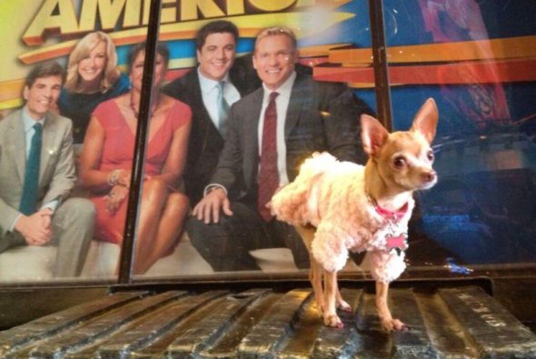 Estar en 'Good Morning America' tiene muy emocionada a Honey Berry.