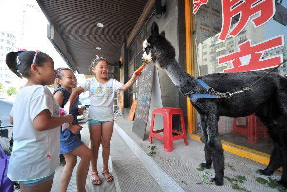 En  Shenyang , China una mujer pagó a un sitio australiano de int...