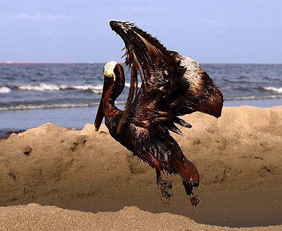 Playas desiertas. Cientos de kilómetros de playas en el sur de Estados U...