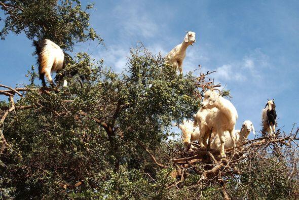 En realidad se debe a la evolución de estos animales que van en búsqueda...
