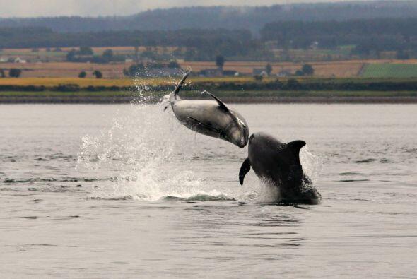 Este par de delfines que participaban en un show se encontraron de frent...