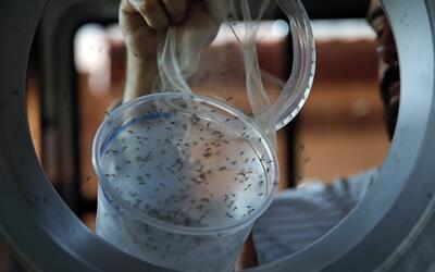 Urge una vacuna contra el zika ante su rápida expansión y los nuevos efe...