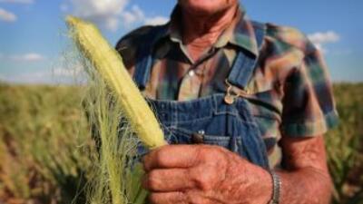 La peor sequía en más de 50 años en Estados Unidos está causando el alza...