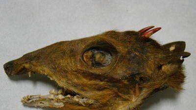 Uno de los seis cráneos descubiertos en una bolsa de frutos secos.