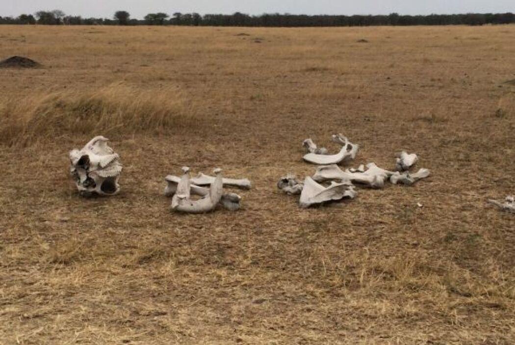 Aquí pudieron ver los restos de alguno de los animales, ¡qué tal!
