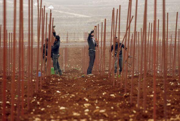 Los trabajadores del campo y jardineria recibirán descansos adicionales...
