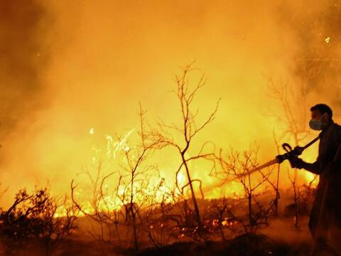 Hoy Israel registró un incendio forestal, en el Bosque de Carmel,...