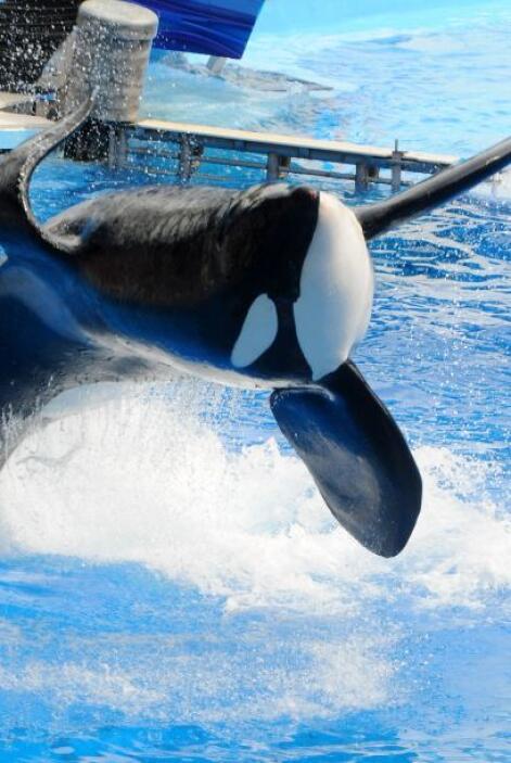 Desde el ataque, los entrenadores no se sumergen al agua con las ballenas.