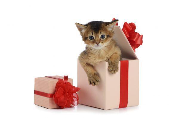 Una de las ventajas de pasar San Valentín con tu mascota, es que...