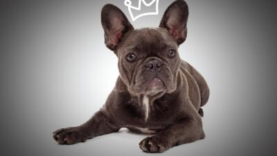 Estas mascotas son casi tan famosas como sus celebrity dueños.