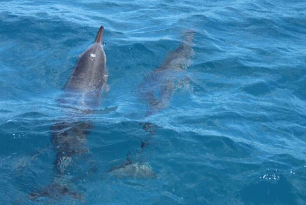 Además, Raúl aprovechó para sumergirse en el mar y tomar impresionantes...