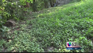 Comunidad al sur de Austin vive pesadilla sanitaria