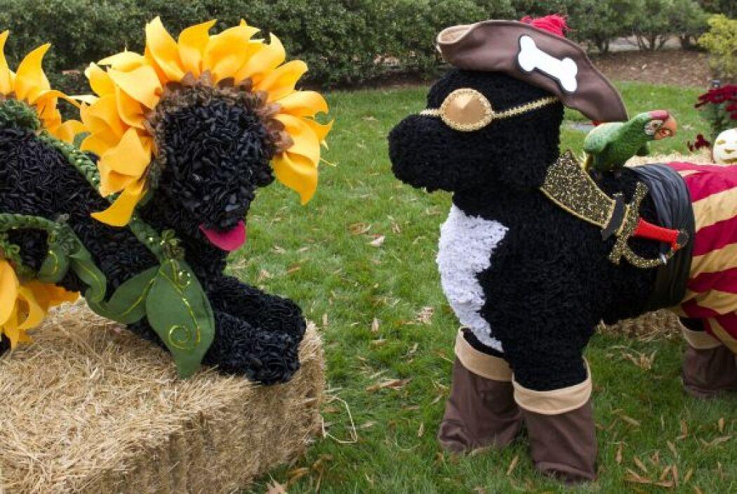 Figurines de los perros presidenciales Bo y Sunny disfrazados.