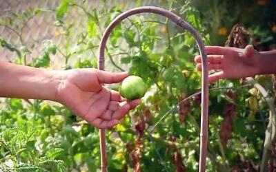 El jardín más saludable del mundo