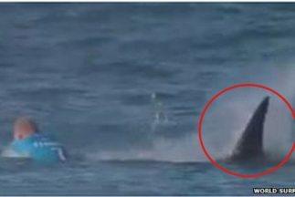 El ex campeón mundial Mick Fanning fue atacado por un tiburón durante la...