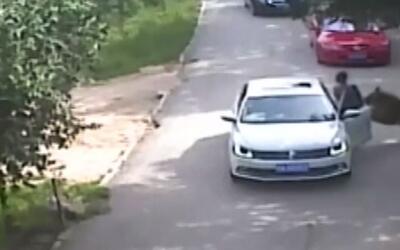 Mujer muere tras el ataque de un tigre en China
