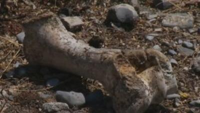 En México encuentran una fosa con más de 30 mil restos humanos