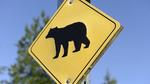Señalamiento de presencia de osos en el sendero de Mount Wilson.