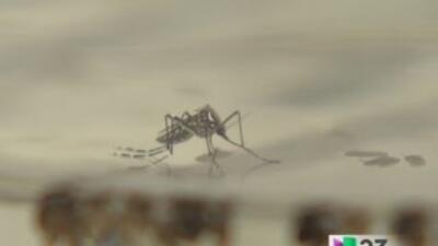 South Miami se niega a fumigación de mosquitos