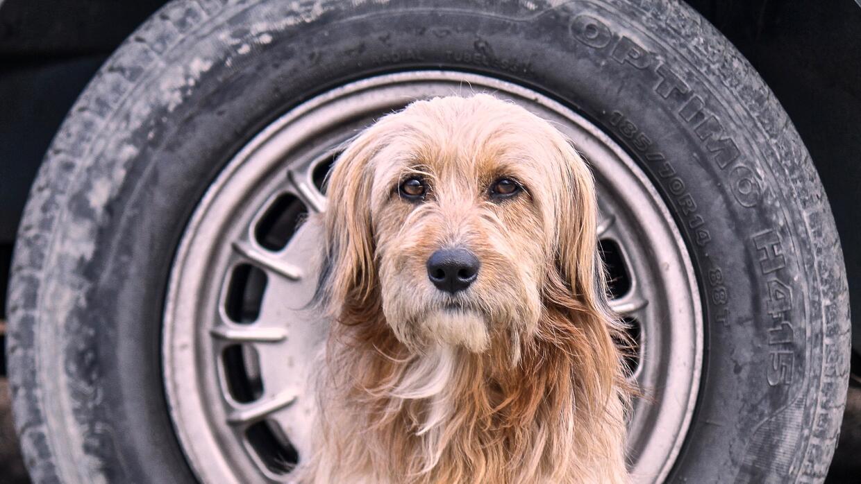 Hugo es el nombre que Jimena Hoyos le dió a este perro callejero que ret...