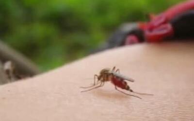 ¿Son los virus del Ébola y Chikungunya una amenaza para EE UU?