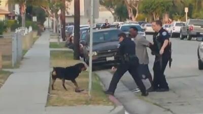 Perro defiende a su amo y policía lo mata
