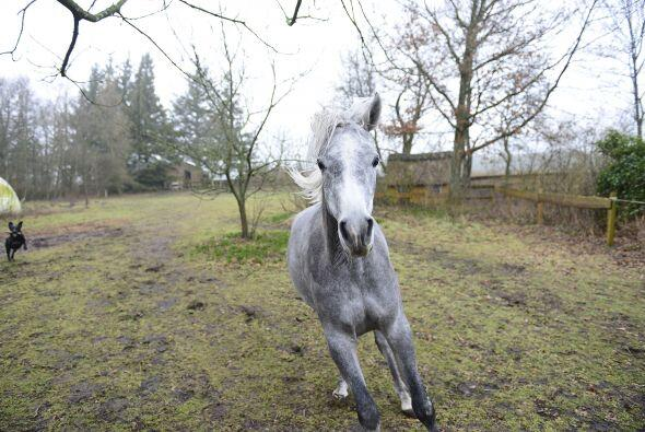 Pero el equino también gusta de salir a cabalgar al campo, claro,...