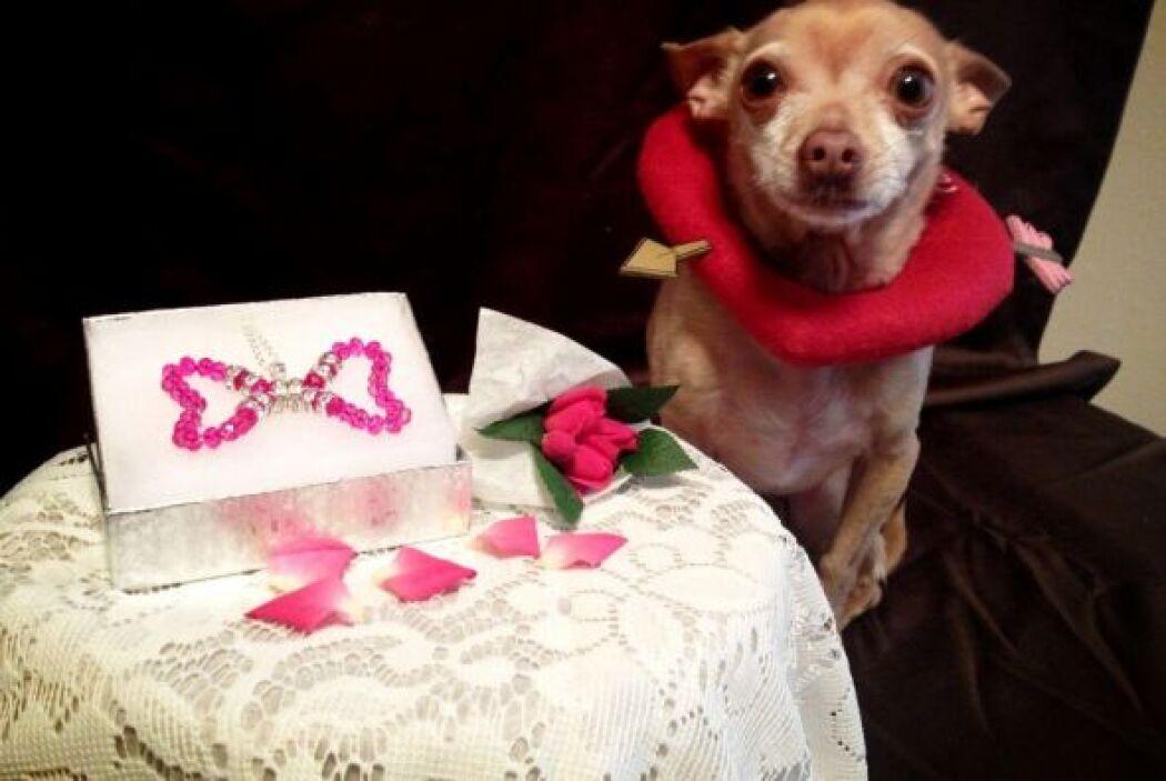 Honey recibió un lindo collar en el Día de San Valentín. ¡Qué consentida!