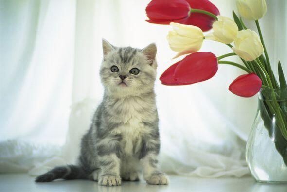 Para los gatitos los cuidados son básicamente los mismos, ellos son muy...