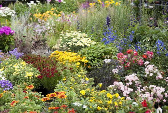 Entonces deberás poner a su disposición plantas que les sirvan de refugi...