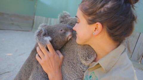 Cariñosos besos de Koalas en San Valentín