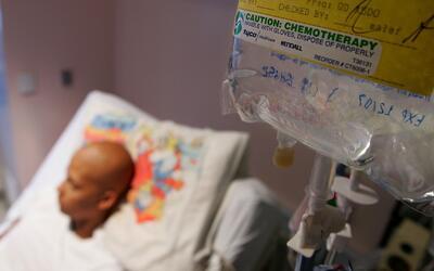 Florida aprueba presupuesto para la investigación de la posible cura al...