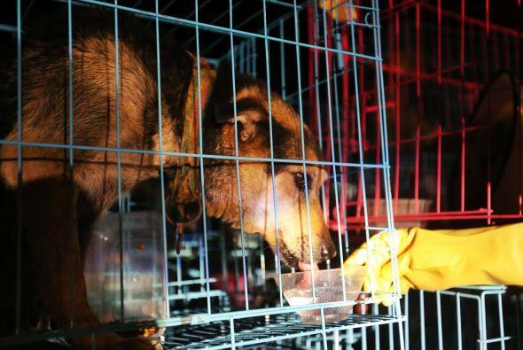 Los camiones contaban con papeles falsificados de los perros que hab&iac...