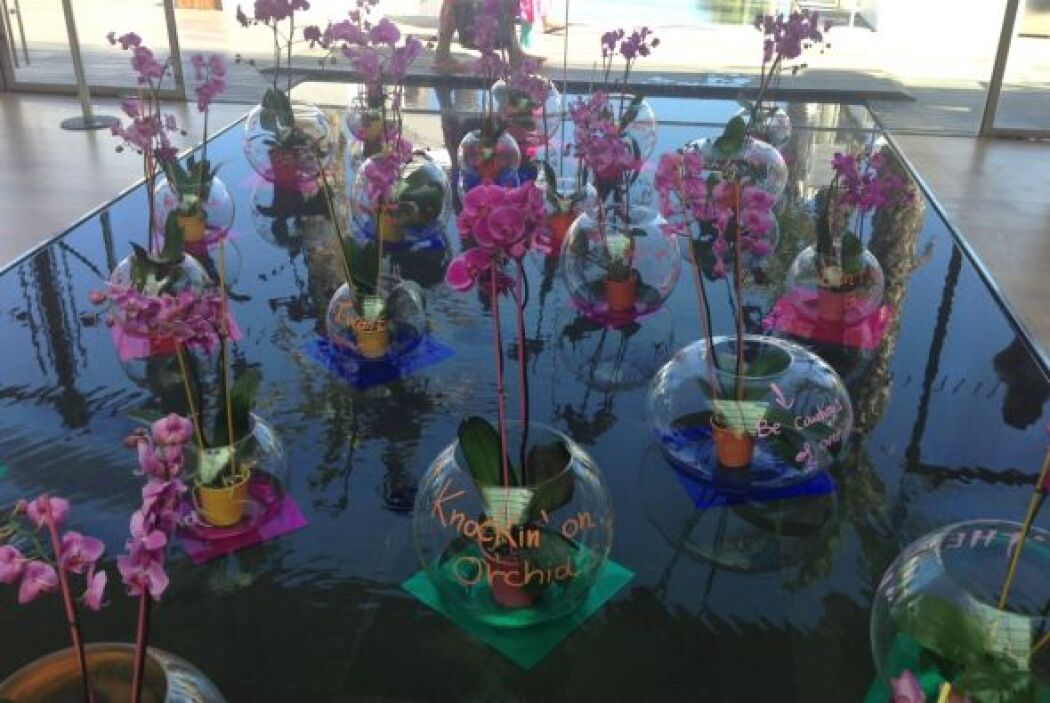 Orquídeas para enmarcar la belleza del lugar donde Aaron y Satcha se casan.