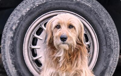 Hugo es el nombre que Jimena Hoyos le dió a este perro callejero...