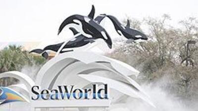 SeaWorld decidió reanudar los shows con orcas aunque con entrenadores fu...