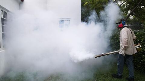 Nuevo estudio insta a extender los esfuerzos de fumigación a los huevos...