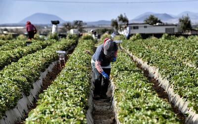 Comunidad campesina en California pide prohibir un nocivo pesticida en l...