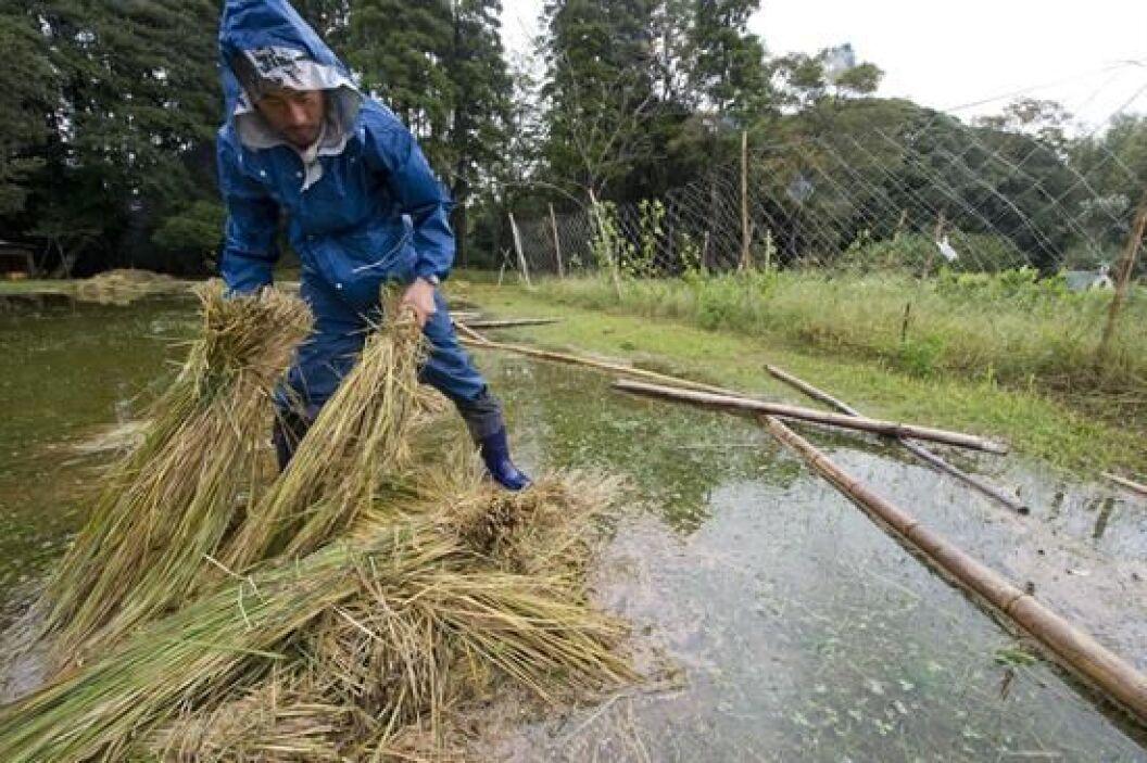 En la isla de Izu Oshima, al sur de Tokio, han sido encontrados 13 cuerp...