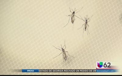 Dallas aloja primer caso por transmisión sexual de zika