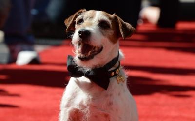 Murió Uggie, el perro más famoso