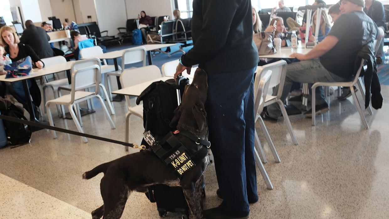 Seguridad en el aeropuerto JFK en Nueva York