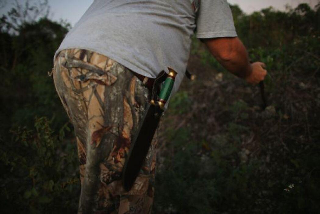 En Florida está prohibida tenencia o comercialización de las pitones bir...