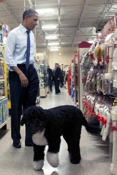 En más de una ocasión, Bo ha participado en actos oficiales de la famili...