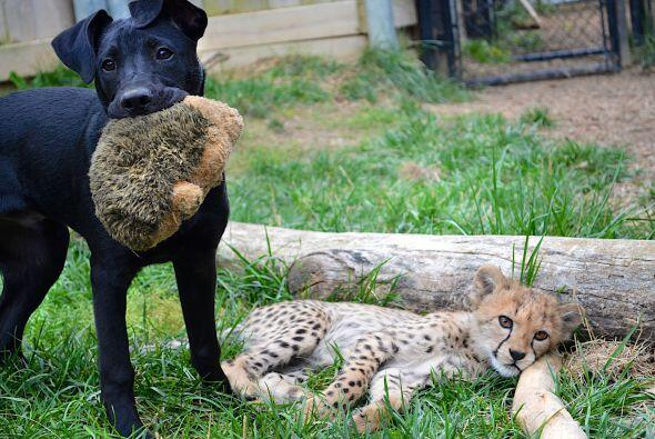 Los cuidadores del zoológico de Cincinatti se sorprendieron mucho...